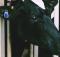 Merck to acquire animal health
