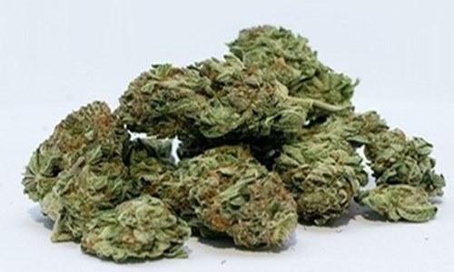 International Cannabis makes $1.2M of strategic investment in Biotii